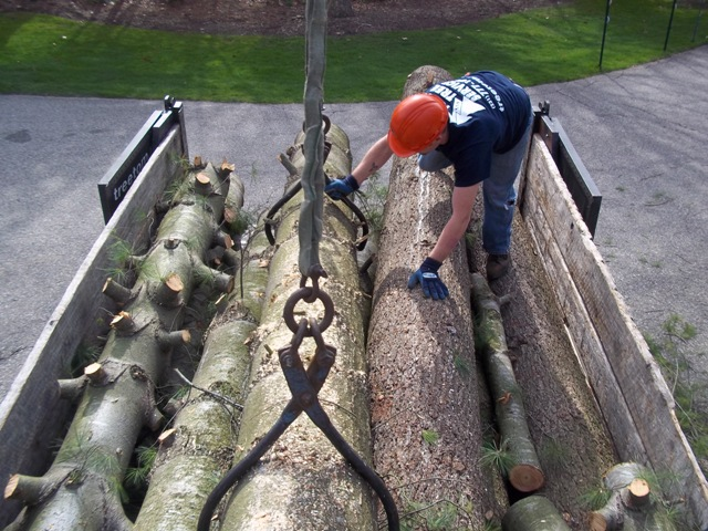 loading firewood